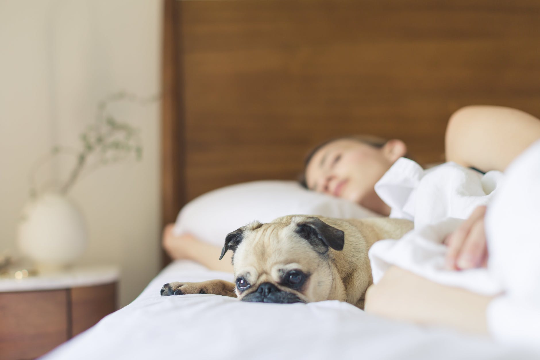 bed bedroom cute dog