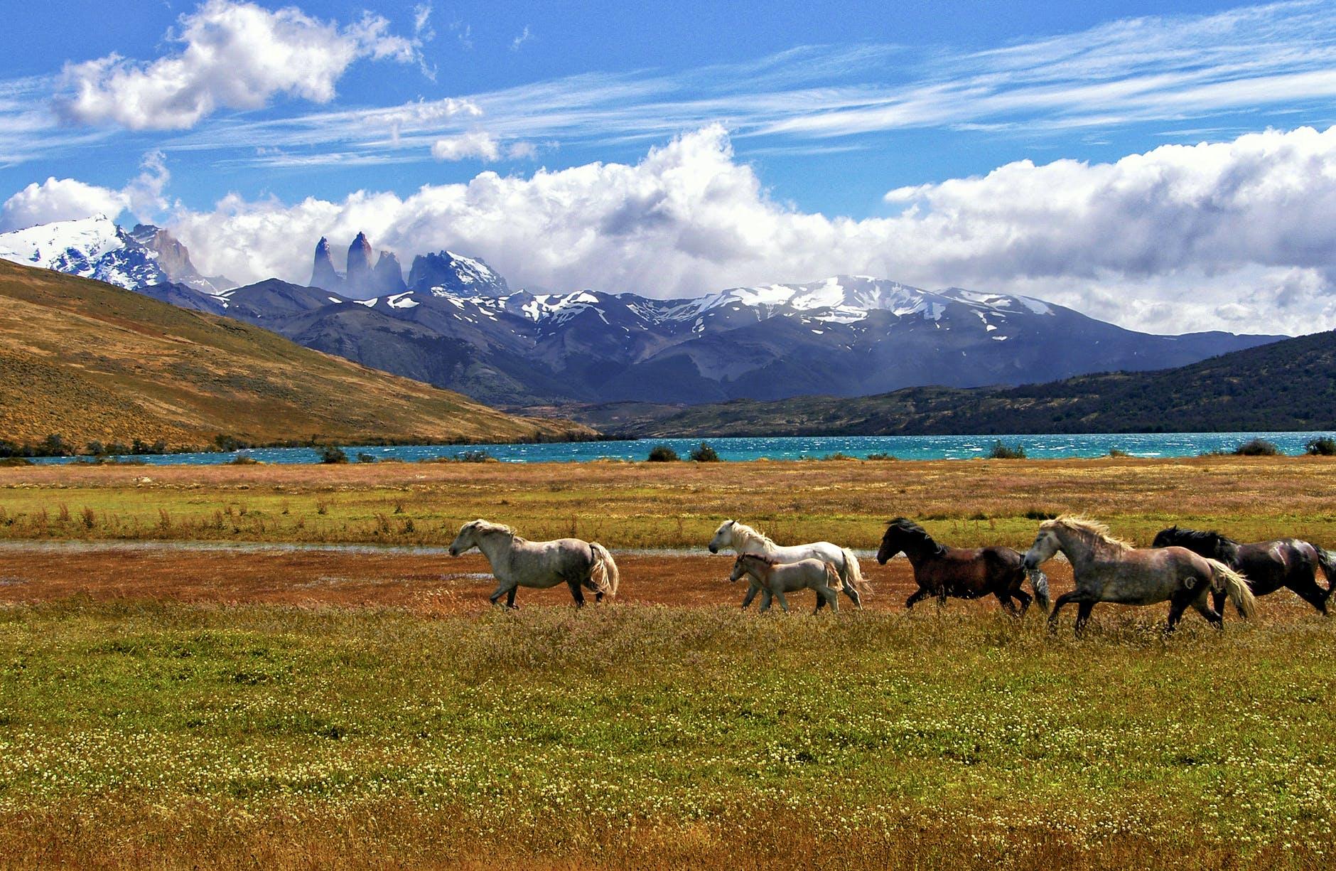 herd of horse green grass field