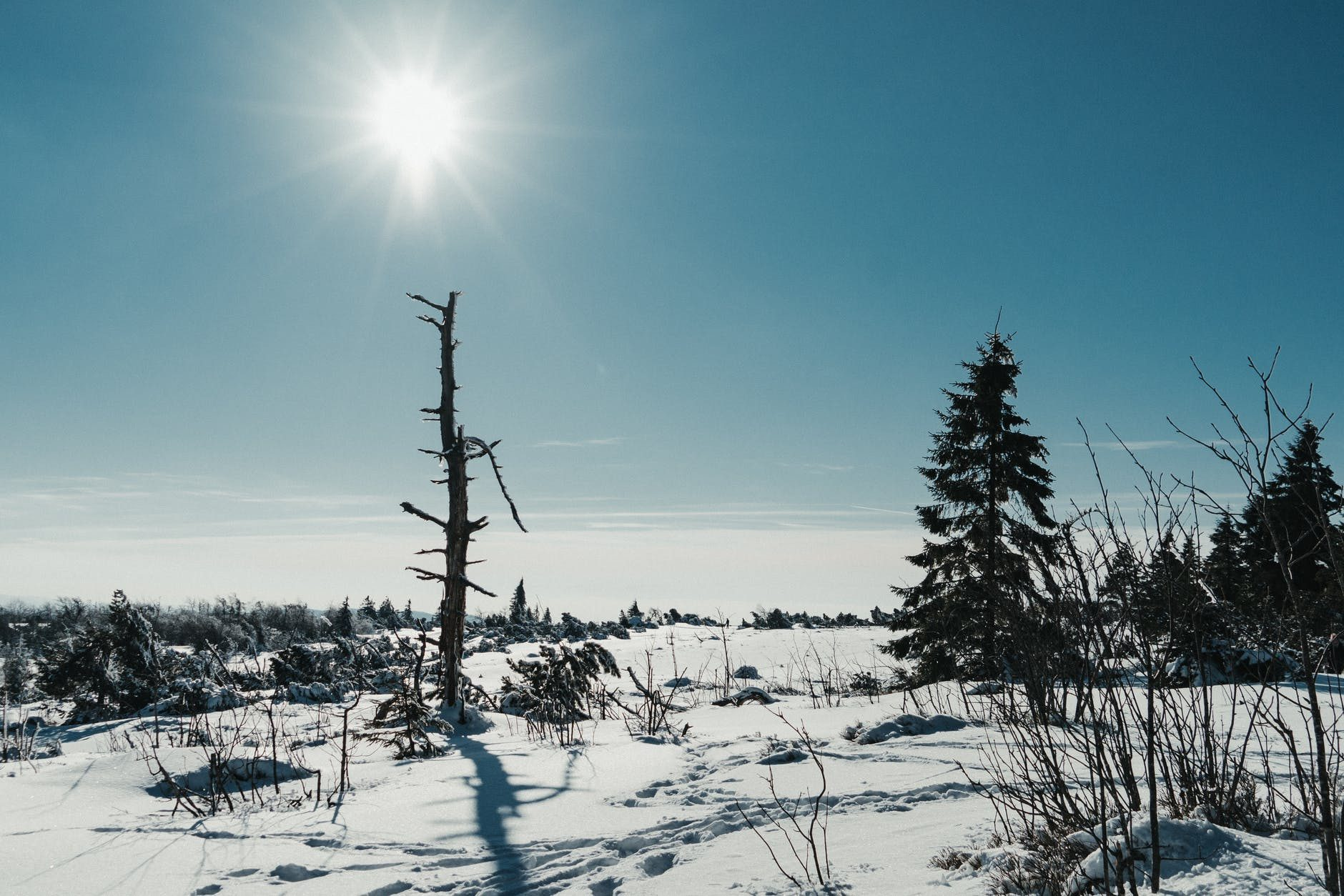 snowy landscape covered with snow and fir trees