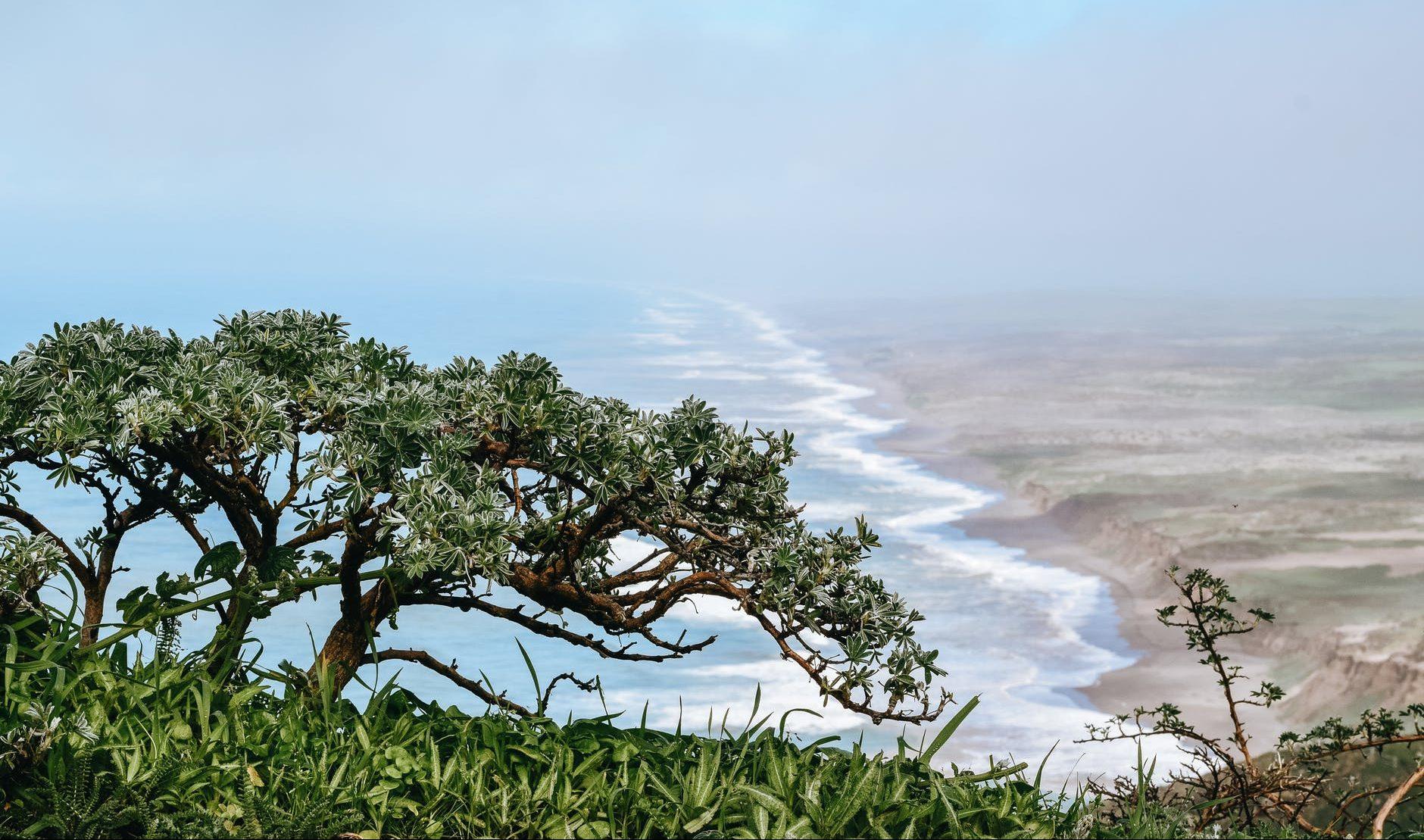 tropical coast of endless ocean