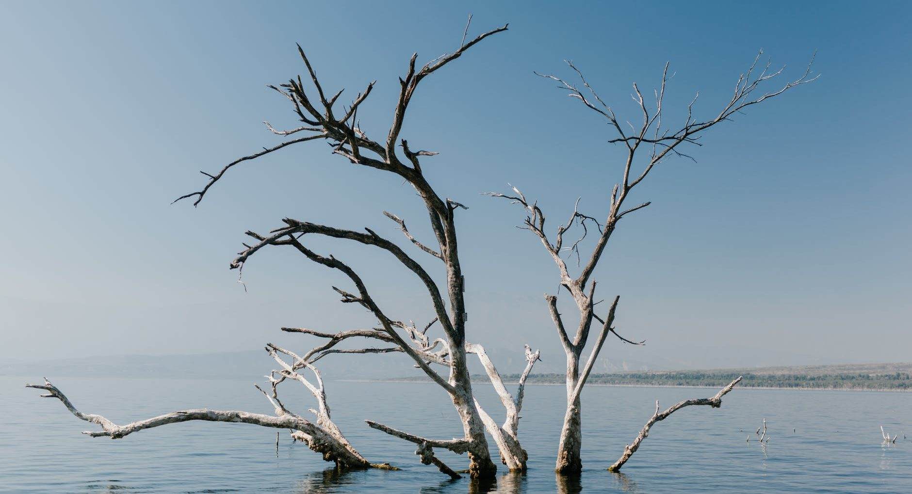 branches of leafless tree in river