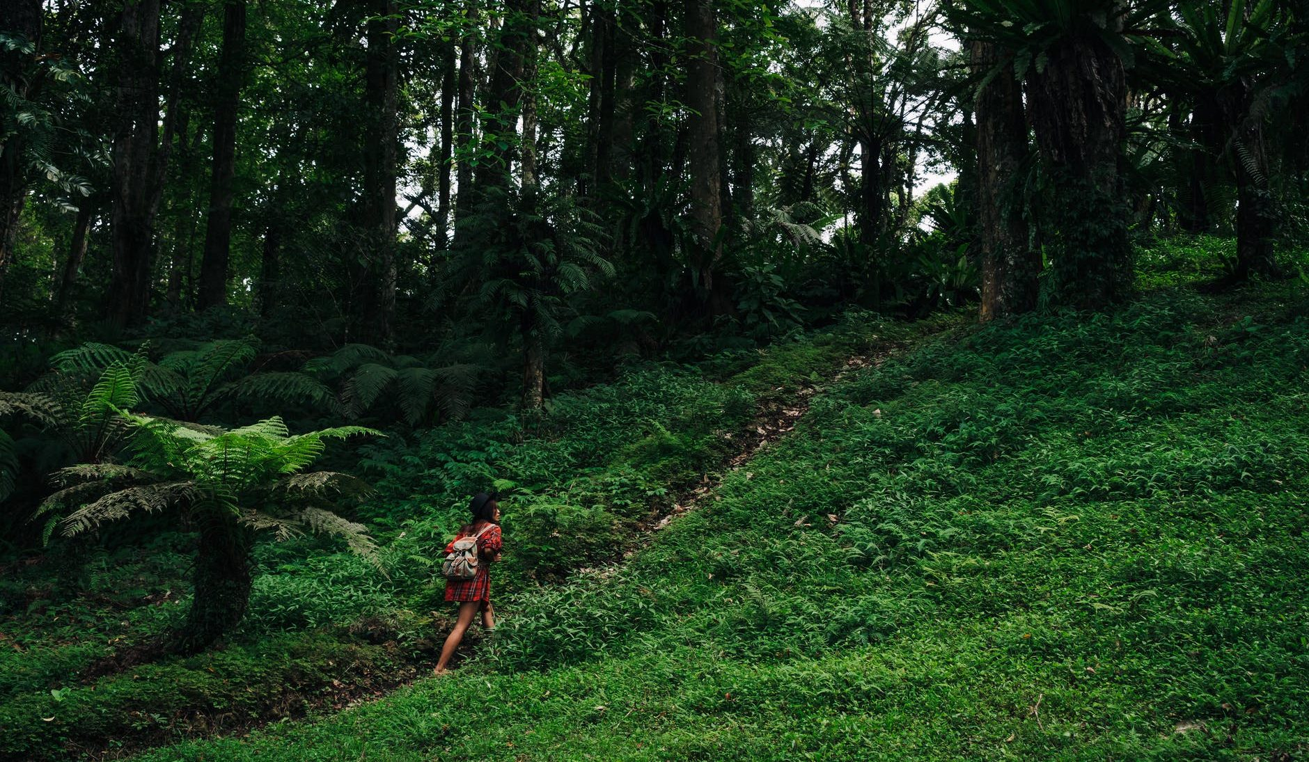 a woman walking in the middle of the rainforest